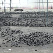 Cococabana Kohlebriketts beim Trocknen